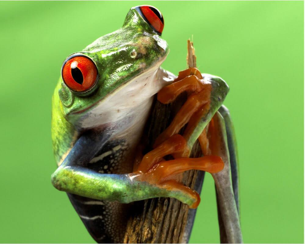 frog 1.jpg